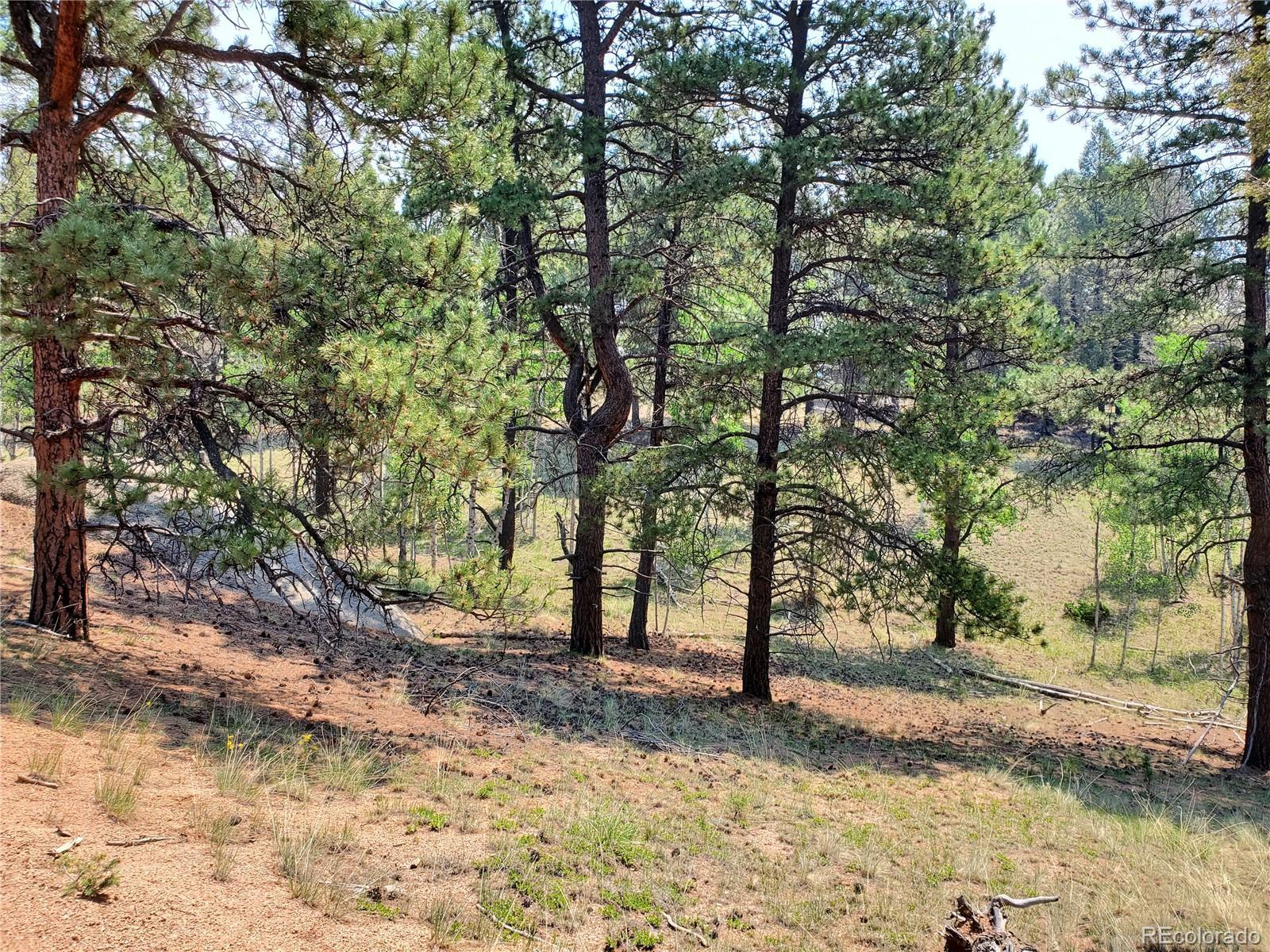36 Garnet Way, Florissant, CO 80816 - #: 2500468