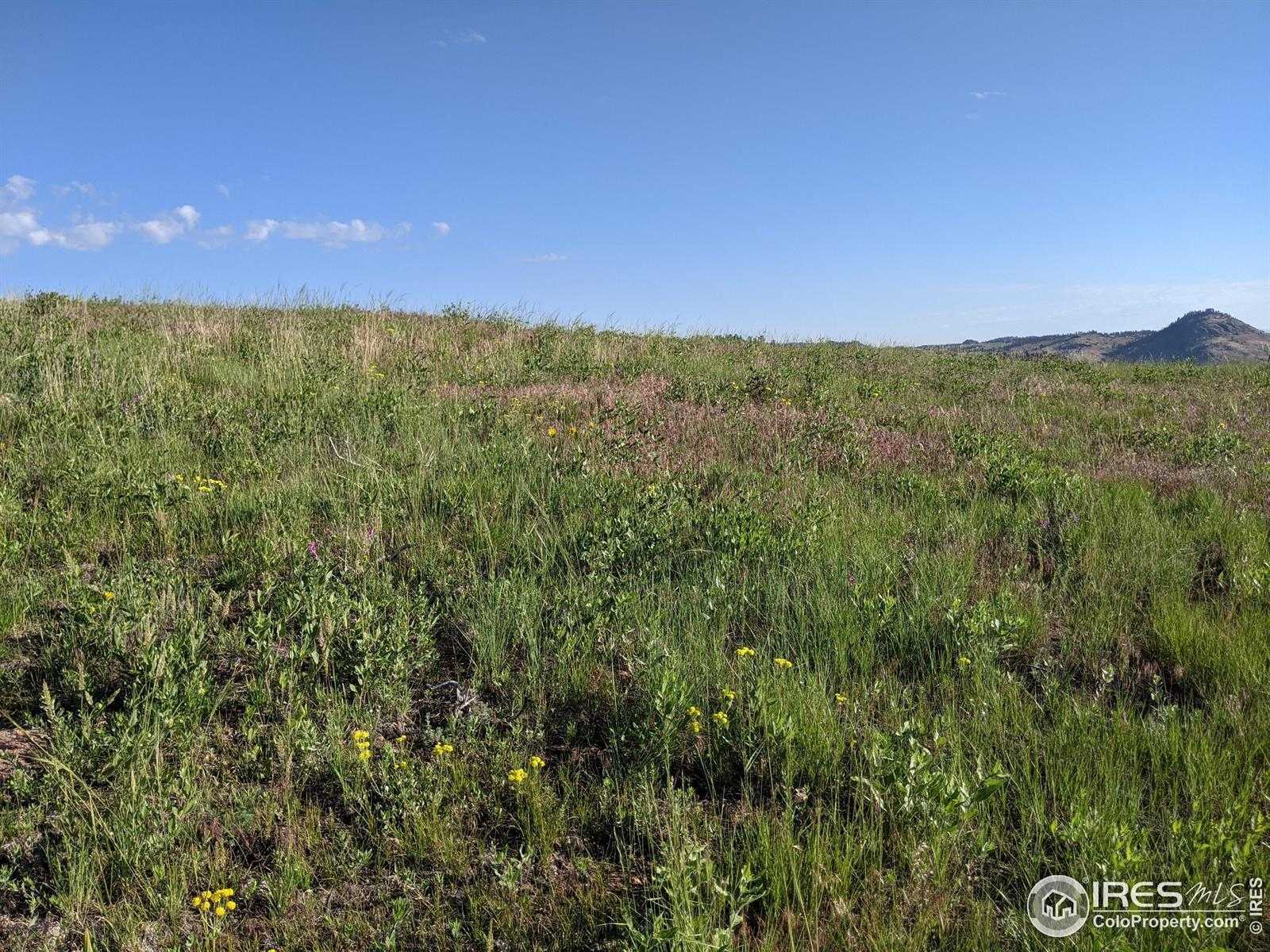 570 Meadow Mountain Drive, Livermore, CO 80536 - #: IR944697